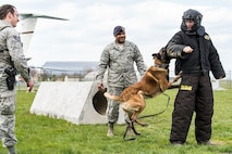 Karlo, a 436th Security Forces Squadron military working dog, attacks the arm of Joey Logano, driver of the No. 22 Ford in the Monster Energy NASCAR Cup Series, during a training demonstration, April 11, 2018, at Dover Air Force Base, Del. Logano experienced the biting power of Karlo, an 80-pound military working dog, under the watchful eyes of Staff Sgts. David Bischoff, MWD handler (left), and Dominque Singleton, MWD trainer, both assigned to the 436th SFS. (U.S. Air Force photo by Roland Balik)