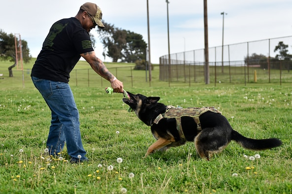 Man plays tug-of-war with dog.