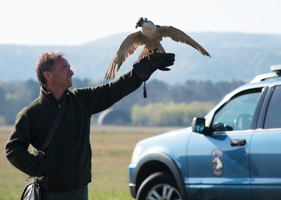 A peregrine falcon perches on its handler as part of an Earth Day demonstration on Ramstein Air Base, Germany, April 17, 2018.