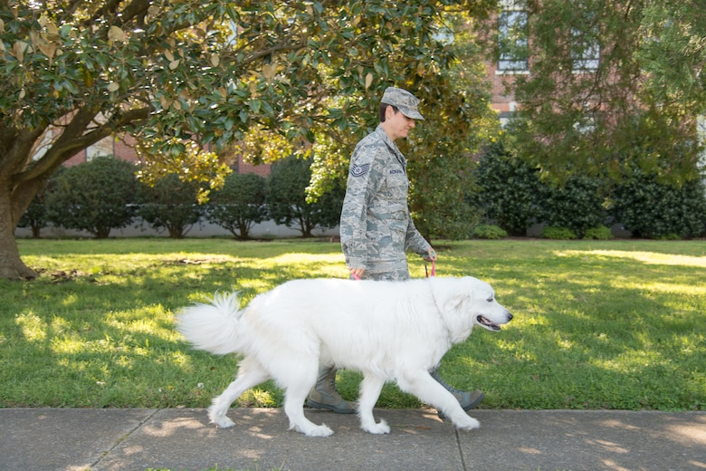 Therapy dog has paw-sitive impact on Airman morale