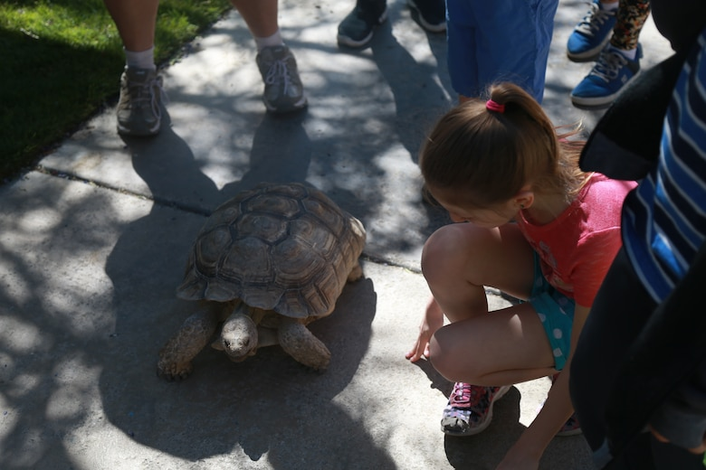 A child gets a close look at a desert tortoise during the Earth Day Festival in Yucca Valley, Calif., April 21, 2018. The festival was held by the Hi-Desert Nature Museum to raise environmental consciousness and educate the public on wildlife conservation and resource management. (U.S. Marine Corps photo by Lance Cpl. Preston L. Morris)