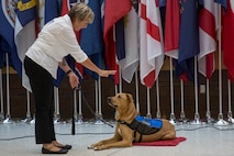 Pappy Boyington, the first therapy dog assigned to Naval Medical Center Camp Lejeune, receives the halt command from Sunnie Tortorici, his trainer, at NMCCL, N.C., July 10, 2018. Pappy is part of the Canine Visitation Program which seeks to facilitate patient recovery, decrease stress levels, and provide a communication medium for patients, family and personnel. (U.S. Marine Corps photo by Lance Cpl. Nathan Reyes)