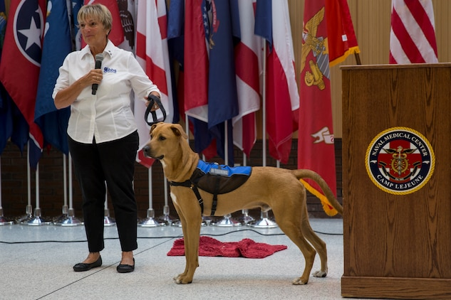Pappy Boyington, a therapy dog assigned to Naval Medical Center Camp Lejeune and his trainer, Sunnie Tortorici, participate in a debut event at NMCCL, N.C., July 10, 2018. Pappy is the first therapy dog to offer support to patients and staff at NMCCL. (U.S. Marine Corps photo by Lance Cpl. Nathan Reyes