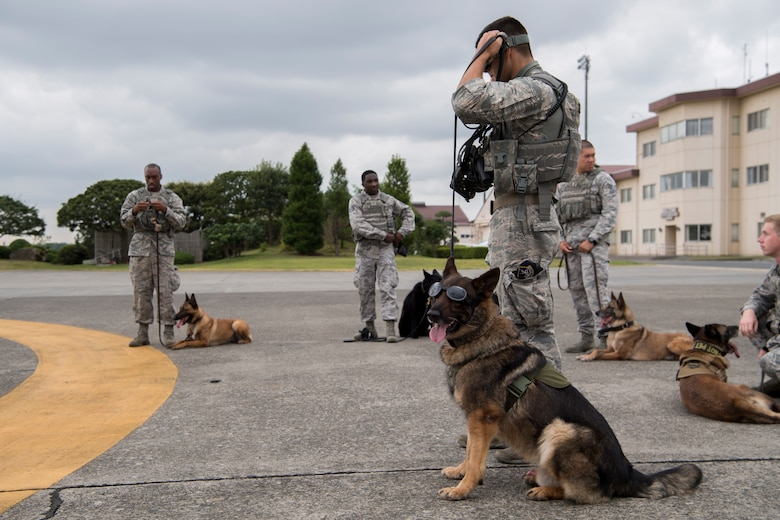 Staff Sgt. Travis Bell, 374th Security Forces Squadron military working dog handler, and Benjo, 374 SFS MWD, prepare to board an aircraft during a 459th Airlift Squadron MWD UH-1N helicopter familiarization flight July 26, 2018, at Yokota Air Base, Japan.