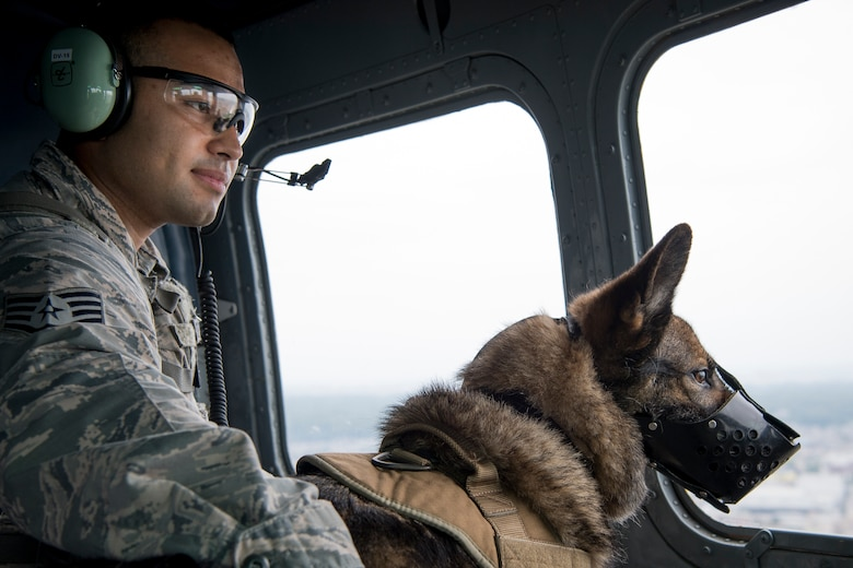 Staff Sgt. Mario Hernandez, 374th Security Forces Squadron military working dog handler, and Demo, 374 SFS MWD, look out the window of a UH-1N helicopter during a 459th Airlift Squadron MWD UH-1N helicopter familiarization flight July 26, 2018, at Yokota Air Base, Japan.
