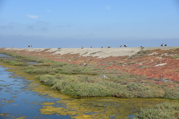 A levee spanning a tidal marsh in Alviso, Calif. that will be raised as part of flood mitigation efforts to protect the South Bay.