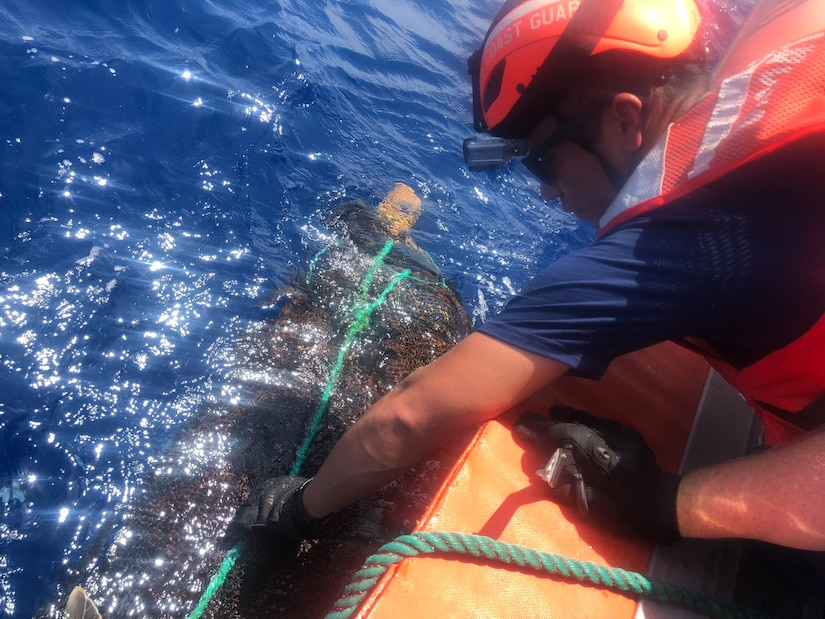 A Coast Guard Cutter Hamilton boat crew rescues an olive ridley sea turtle from abandoned fishing nets and line July 10, 2018, in the Eastern Pacific Ocean. The boat crew cut the turtle free and removed the debris from the ocean.