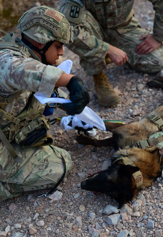 "Staff Sgt. Juan Hinojosa, 99th Security Forces Squadron military working dog handler secures a splint to Erik, 99th SFS MWD, during a training exercise Aug. 8, 2018, at Nellis Air Force Base, Nev. The exercise included a trail of possible dangers, a ""live"" gunfire situation and ended with an injury scenario where handlers had to apply their veterinary knowledge. (U.S. Air Force Photo by Airman 1st Class Haley Stevens)"