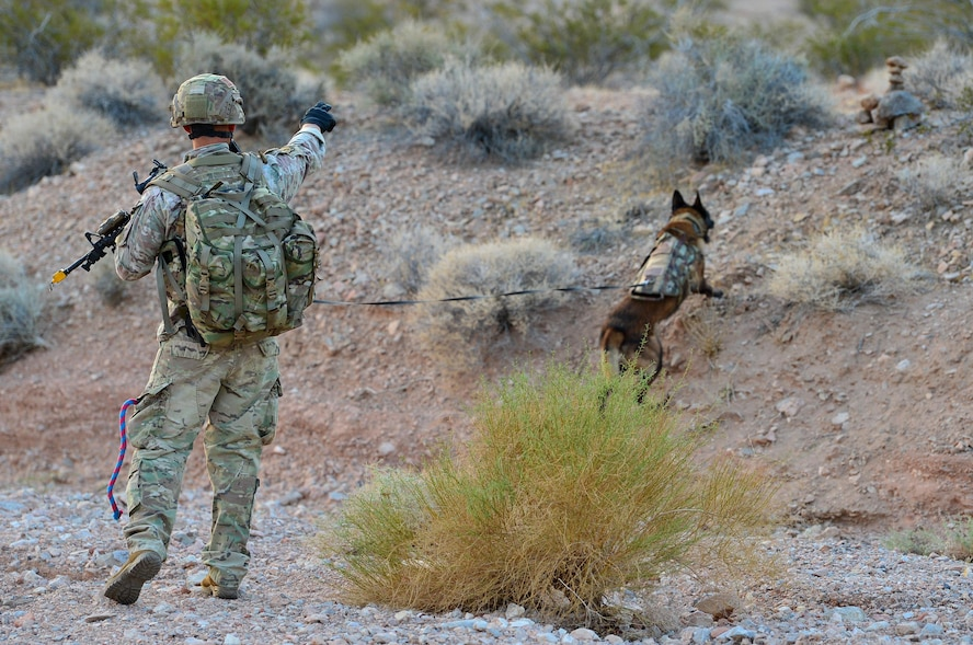Staff Sgt. Juan Hinojosa, 99th Security Forces Squadron military working dog handler and Erik, 99th SFS MWD, check a rock marker during a training exercise Aug. 8, 2018, at Nellis Air Force Base, Nev. This training helps MWD teams practice their jobs in real-world scenarios. (U.S. Air Force Photo by Airman 1st Class Haley Stevens)