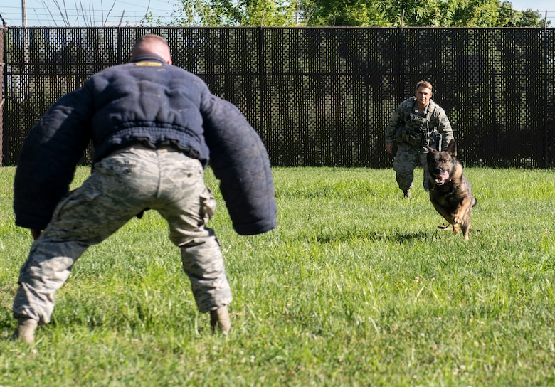 Irk, 375th Security Forces Squadron Military Working Dog, runs at a simulated attacker during a working dog demonstration at the 375th SFS kennel on Scott Air Force, Illinois, July 25, 2018.