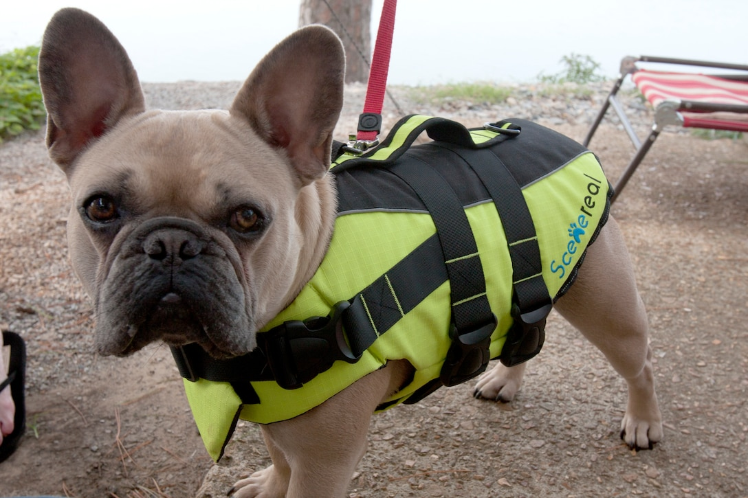 Water safety isn't just for humans it's for pets too!
