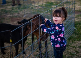 A child admires the goats in a petting zoo during Holiday Magic 2018, Dec. 7, 2018, at Luke Air Force Base, Ariz.