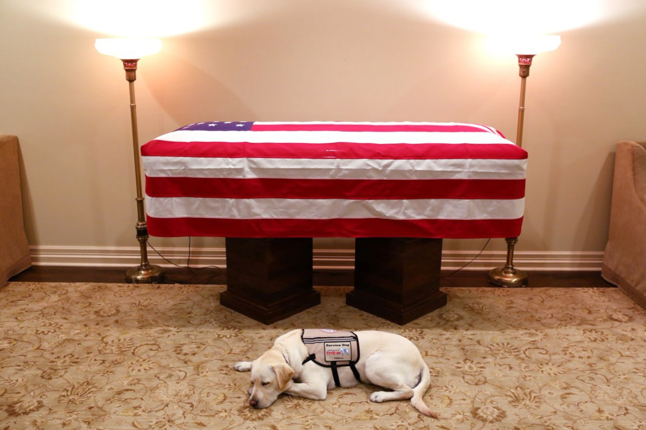 A dog lays next to a casket covered in a flag.