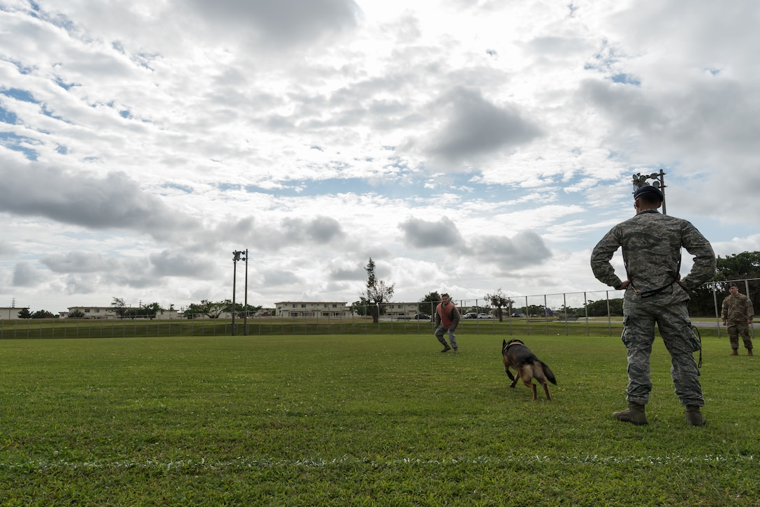 U.S. Air Force Staff Sgt. Charles Gamez, 18th Security Forces Squadron military working dog handler, right, unleashes his military working dog, Biba, to capture Senior Airman James Burger as he runs away Nov. 21, 2018, at Kadena Air Base, Japan. The bite of a military working dog is intended to subdue a suspect quickly and efficiently.