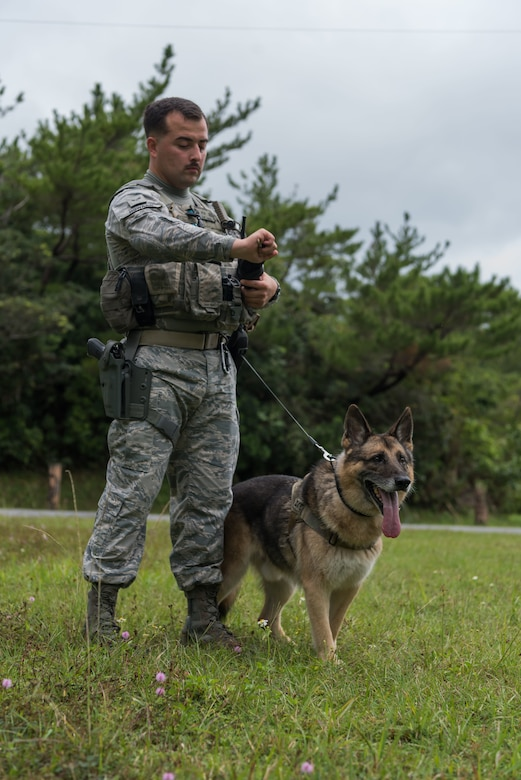 U.S. Air Force Senior Airman Carlos Howard, 18th Security Forces Squadron military working dog handler, prepares his military working dog, KitKat, to engage a suspect Nov. 21, 2018, at Kadena Air Base, Japan. Military working dogs can be trained to aid in capturing, detaining and transporting suspects, as well as identify drugs and improvised explosive devices.