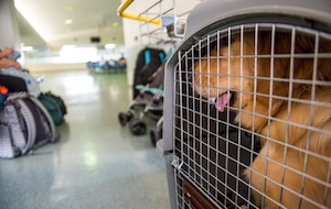 A customer's dog sits in a kennel in the designated pet area