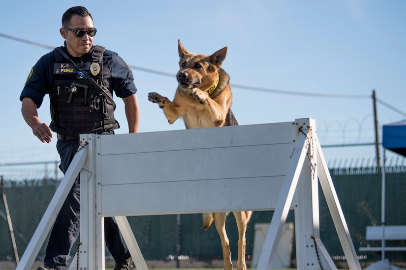 Dog handler leads dog through obstacle course