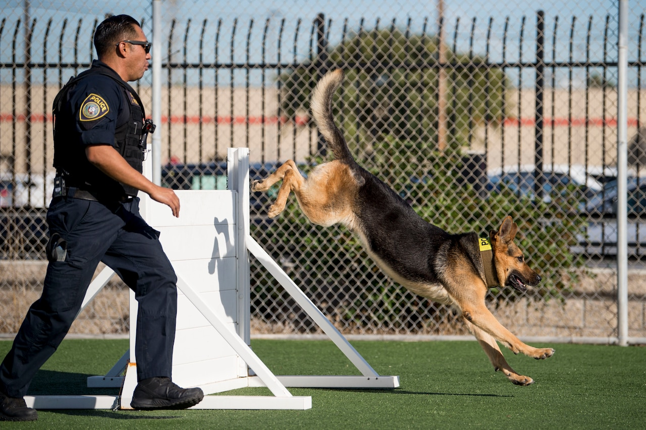 Dog handler leads dog through obstacle course.