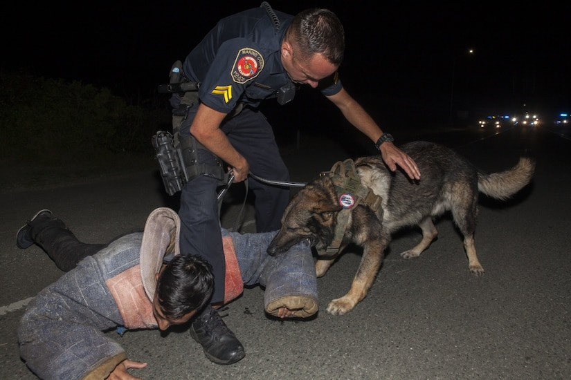 Police officer handles a working dog during training.