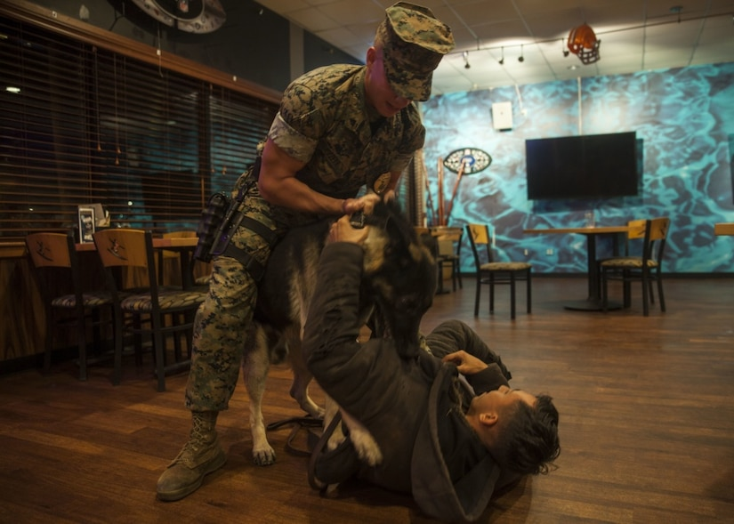 Marine dog handler and working dog subdue a simulated suspect during training.