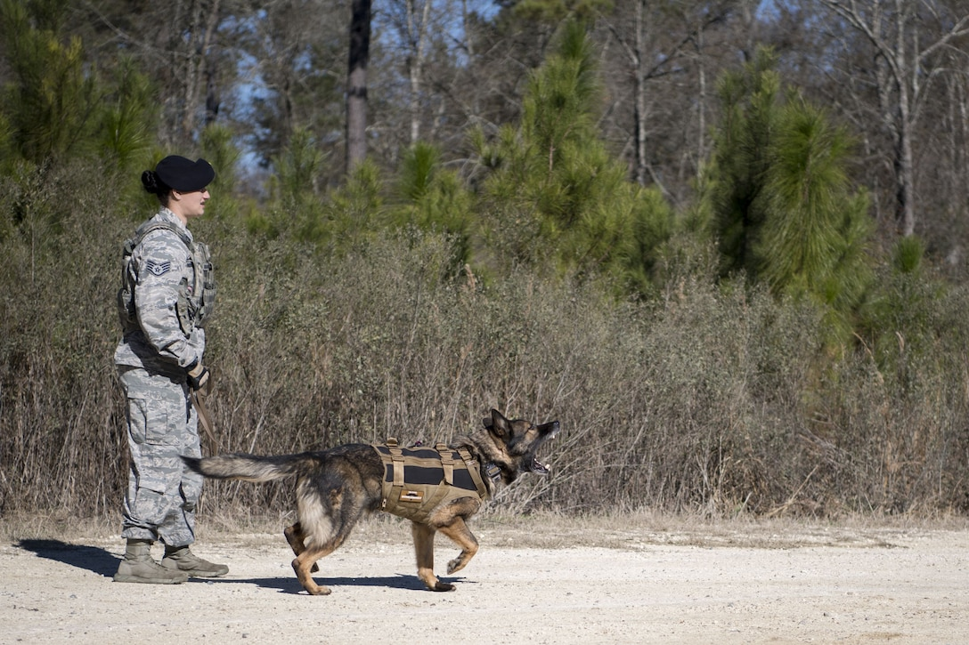 Staff Sgt. Renee Mansour, 23d Security Forces Squadron Military Working Dog (MWD) handler, and MWD Blitz, prepare to conduct scent-scout training, Jan. 31, 2018, at Moody Air Force Base, Ga. Moody's MWDs are capable of conducting scent, sight or sound-scouting to find missing people or suspected criminals. In addition to these skills, the K-9s are used for patrols, drug detection and explosive detection. (U.S. Air Force photo by Senior Airman Daniel Snider)