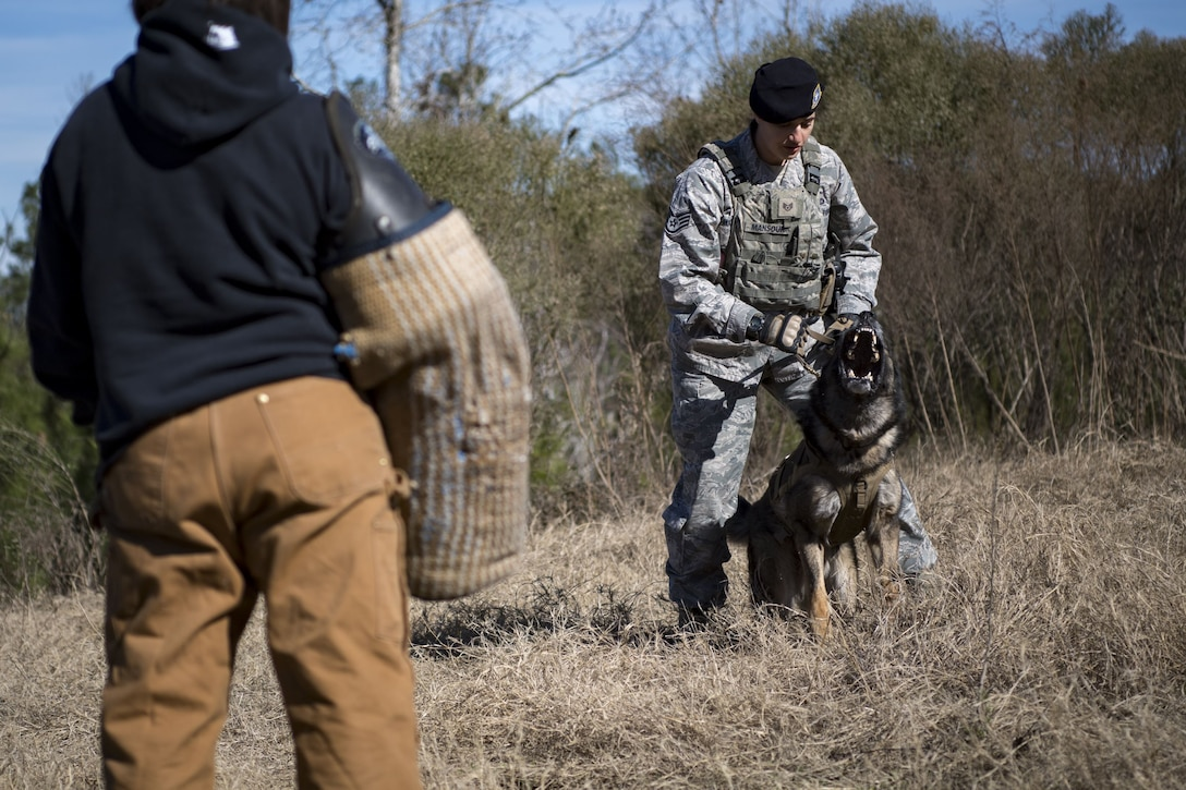 Staff Sgt. Renee Mansour, 23d Security Forces Squadron Military Working Dog (MWD) handler, prepares to release MWD Blitz on a suspected criminal during scent-scout training, Jan. 31, 2018, at Moody Air Force Base, Ga. Moody's MWDs are capable of conducting scent, sight or sound-scouting to find missing people or suspected criminals. In addition to these skills, the K-9s are used for patrols, drug detection and explosive detection. (U.S. Air Force photo by Senior Airman Daniel Snider)