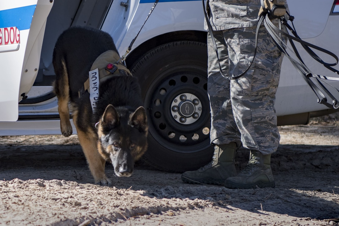 Senior Airman Ashlee Pollard, 23d Security Forces Squadron military working dog (MWD) handler, escorts MWD Falo out of a squad car, Jan. 31, 2018, at Moody Air Force Base, Ga. Moody's MWDs are capable of conducting scent, sight or sound-scouting to find missing people or suspected criminals. In addition to these skills, the K-9s are used for patrols, drug detection and explosive detection. (U.S. Air Force photo by Senior Airman Daniel Snider)