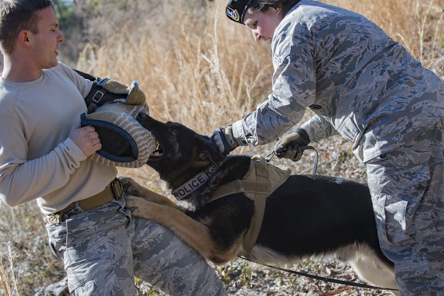 Military Working Dog (MWD) Falo bites Staff Sgt. Tyler Sexton, 23d Security Forces Squadron MWD trainer, during scent-scout training, Jan. 31, 2018, at Moody Air Force Base, Ga. Moody's MWDs are capable of conducting scent, sight or sound-scouting to find missing people or suspected criminals. In addition to these skills, the K-9s are used for patrols, drug detection and explosive detection. (U.S. Air Force photo by Senior Airman Daniel Snider)