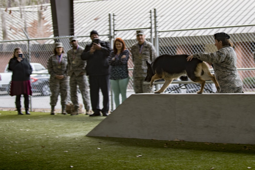 Senior Airman Ashlee Pollard, 23d Security Forces Squadron military working dog handler, directs MWD Falo through an obstacle course during a Tour of Champions, Feb. 2, 2018, at Moody Air Force Base, Ga. The Tour of Champions recognizes 23d Wing annual award nominees and an opportunity to gain a better perspective of the 23d Wing's mission. (U.S. Air Force photo by Senior Airman Daniel Snider)