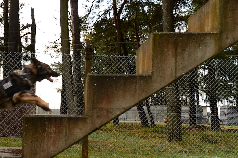 The obstacle course is one of many challenges that are used to display what the MWD is capable of when trained properly.