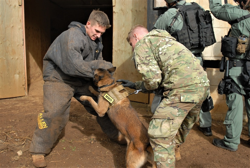 The Army's 520th Military Working Dog Detachment and Honolulu Police Department's K-9 Unit conducted joint training at Schofield Barracks, Hawaii, Feb. 8, 2018. The training emphasized best practices when using a MWD while entering and clearing a building. The K-9's and their handlers were also tested on their abilities to find explosives and drug paraphernalia. Army photo by Sgt. 1st Class Wynn A. Hoke