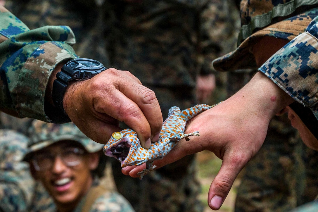 Marines observe and touch a jungle gecko.