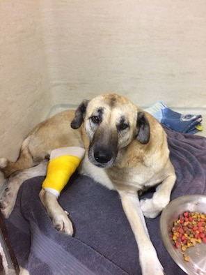 Bebe, a stray dog, rests at the veterinary treatment facility after being treated for wounds.