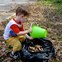 A young volunteer collecting air potatoes