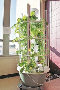 Students of Fort Riley Middle School are growing their understanding of where their food comes from and how to care for them with three hydroponic tower gardens. As a hydroponic tower garden, the plants do not require any soil.