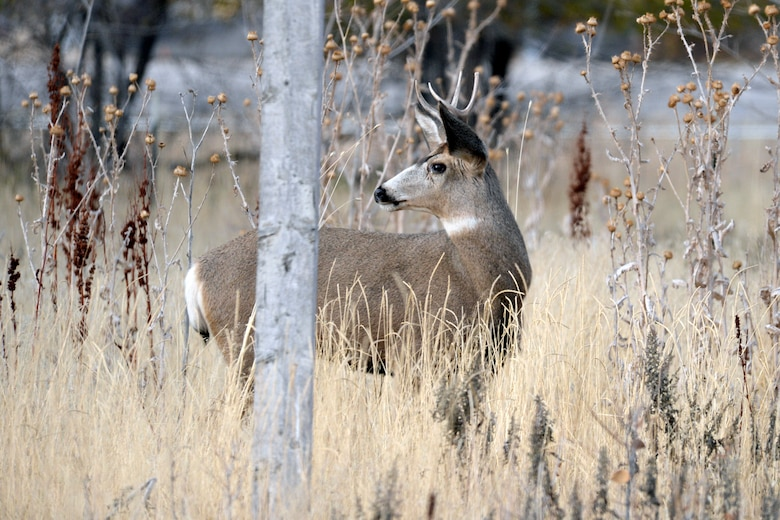 Balancing Hill AFB wildlife populations with human activity