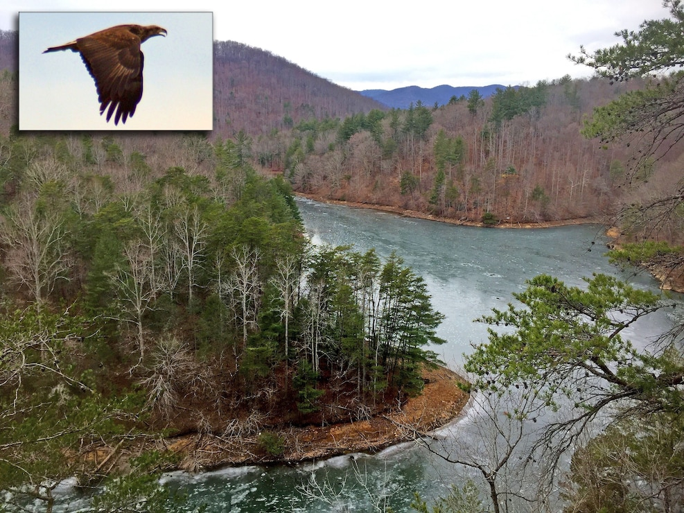 Ranger Brian Stewart took this picture (to include inset) of an area at Philpott Lake near Bassett, Virginia where American bald eagles are congregating. If you'd like to find out where to go, stop by the Visitors Assistance Center at Philpott Dam and Reservoir.