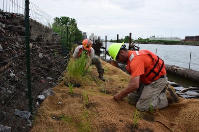 Buffalo native species of sub-aquatic vegetation returning to Buffalo River after over a century