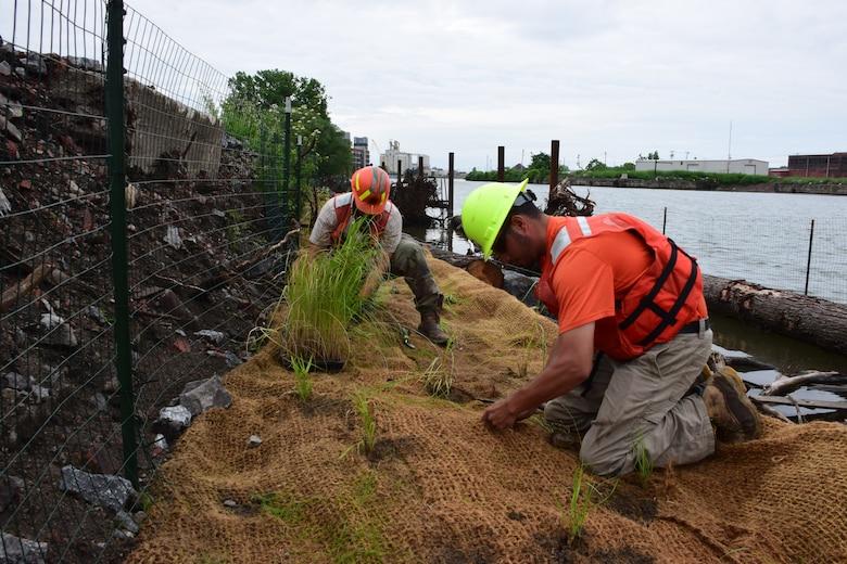 Buffalo native species of sub-aquatic vegetation returning to Buffalo River after over a century