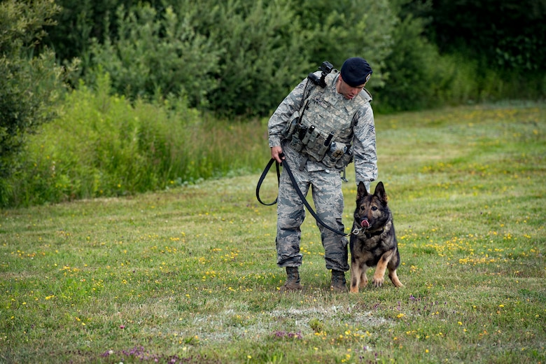 U.S. Air Force Senior Airman Nicholas Willett, 86th Security Forces Squadron military working dog handler, and his dog Charly, perform bite training on Ramstein Air Base, Germany, June 25, 2018. Military working dogs in the Air Force go through their initial training at Lackland Air Force Base, Texas, where it's decided if they learn to detect narcotics or bombs. (U.S. Air Force photo by Senior Airman Devin Boyer)