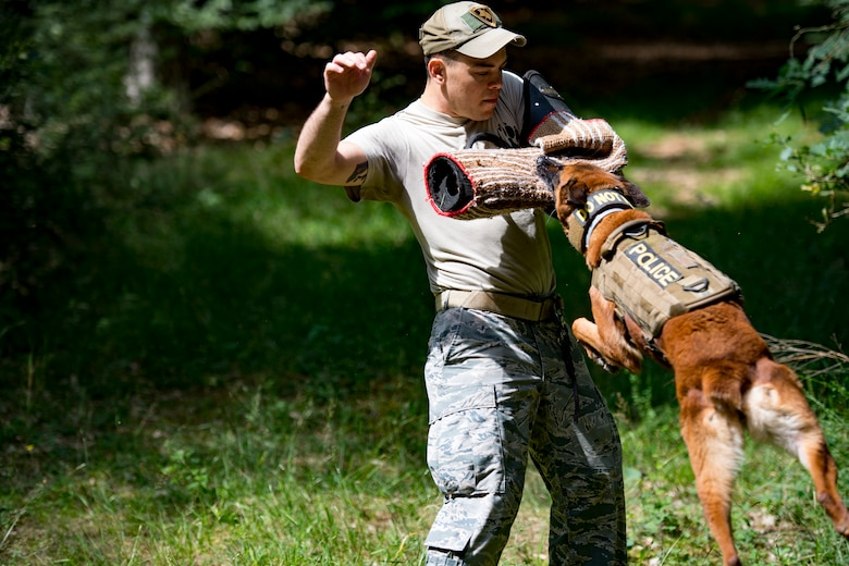 U.S. Air Force 86th Security Forces Squadron military working dog, Rrisky, bites Staff Sgt. Miguel Novoa's wrap, 86th SFS MWD handler, during training in Ramstein, Germany, June 25, 2018. Handlers try to make training enjoyable for the dogs so that they will continue to be motivated when performing their duties. (U.S. Air Force photo by Senior Airman Devin Boyer)