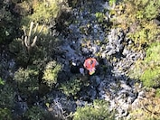 The crew of a Coast Guard MH-65 Dolphin helicopter from Air Station Borinquen rescued a missing hunter July 13, 2018, on Mona Island, Puerto Rico.