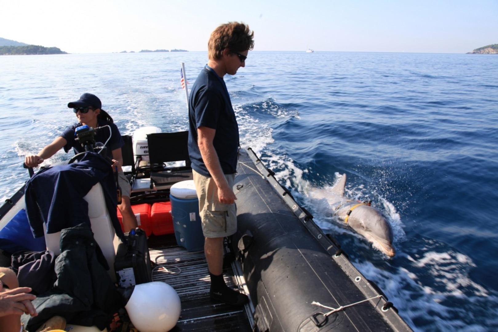 U.S. Navy Marine Mammal Program Performs Mine Clearance Operations During RIMPAC SOCAL 2018