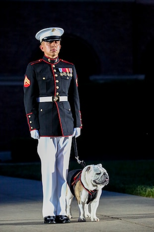 Corporal Troy Nelson, Marine Corps mascot handler, stands at attention with Sgt. Chesty XIV, the official Marine Corps mascot, during the Friday Evening Parade at Marine Barracks Washington, June 1, 2018.