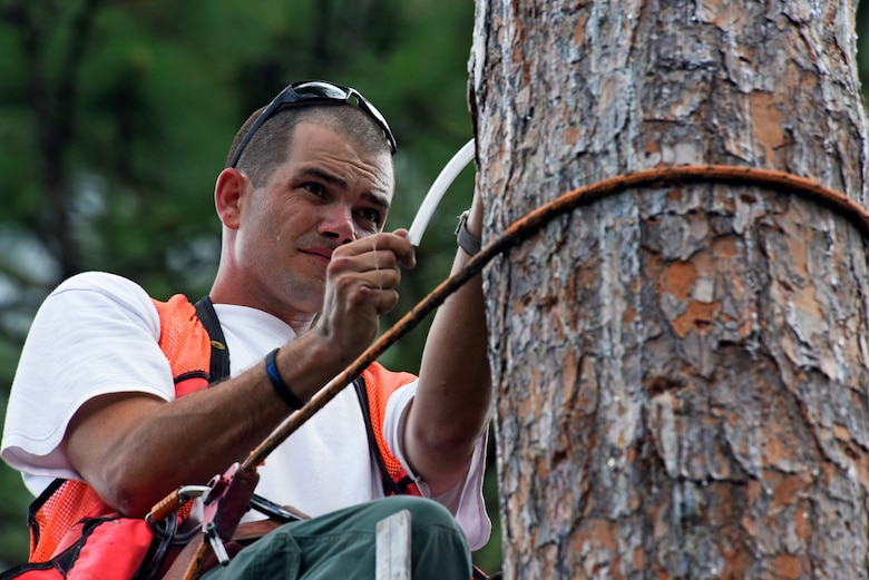 Hutch Collins, 20th Civil Engineer Squadron threatened and endangered species biologist, looks for baby red-cockaded woodpeckers in a tree cavity at Poinsett Electronic Combat Range at Wedgefield, S.C., May 30, 2018.