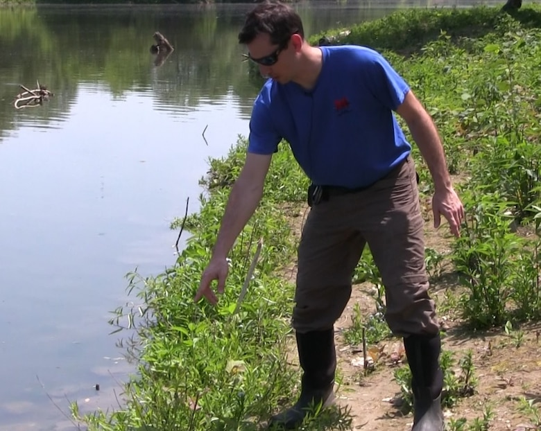 The Corps of Engineers ecosystem restoration project at Seneca Bluffs Natural Habitat Park, along the Buffalo River in South Buffalo, is approaching its final phase. The project team will plant native riverbank plant species to replace the invasive species like Japanese knotweed and phragmites removed last year.