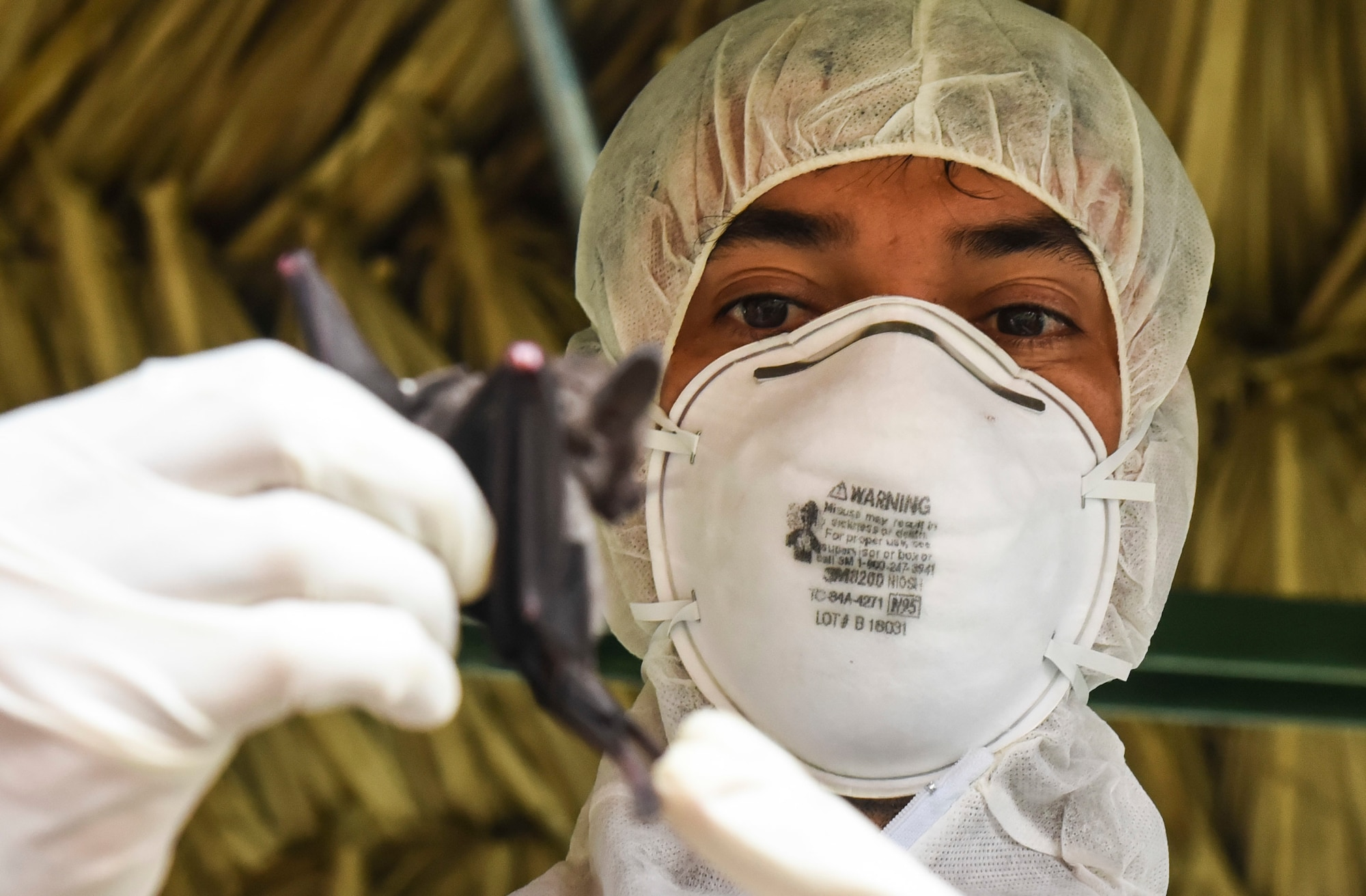Publio Gonzalez, a biologist with the Gorgas Institute, holds a bat in Meteti, Panama, June 6, 2018. Gonzalez and U.S. military doctors were participating in an Emerging Infectious Diseases Training Event, in which they received informational lectures from Panamanian infectious disease experts and field studies of possible virus-carrying wildlife and insects. The event took place during Exercise New Horizons 2018, which is a joint training exercise where U.S. military members conduct training in civil engineer, medical, and support services while benefiting the local community. (U.S. Air Force photo by Senior Airman Dustin Mullen)
