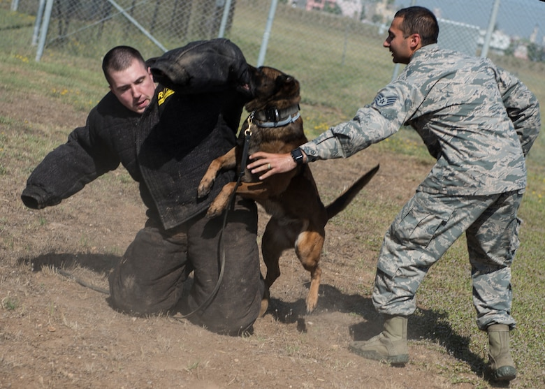 INCIRLIK AIR BASE, Turkey – U.S. Army Capt. James Gaffney, 39th Air Base Wing veterinarian, participates in a controlled aggression tactic demonstration with U.S. Air Force military dog Buck, assigned to the 39th Security Forces Squadron at Incirlik Air Base, Turkey, June 8, 2018.