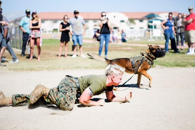 """War Dawg Weekend:"" MCAS Miramar hosts military working dog competition"