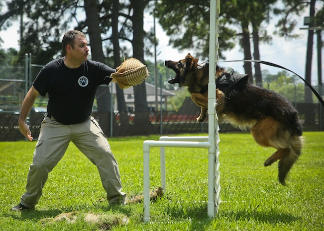Officer Jack Hunt conducts bite training with his dog aboard Marine Corps Air Station Beaufort June 13. The military working dog section aids the air station in detecting contraband and conducting security checks. Hunt is a dog handler with the Provost Marshal's Office aboard MCAS Beaufort.